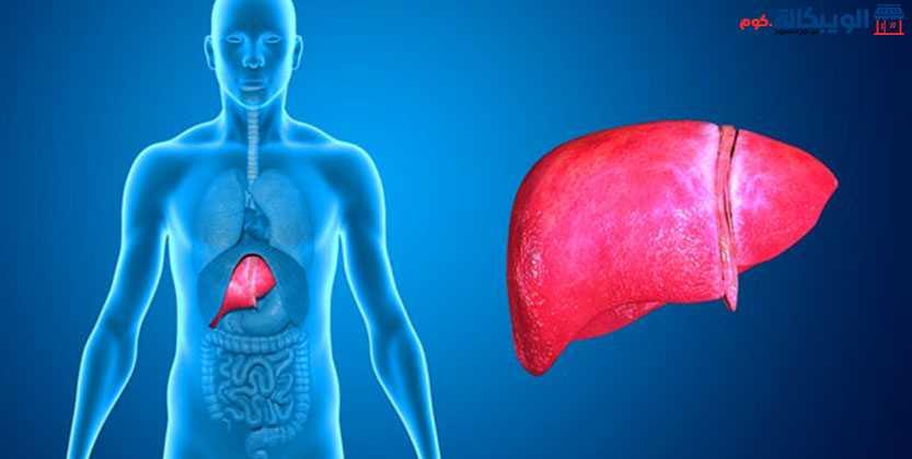 أمراض الكبد وأسبابها وطرق علاجها